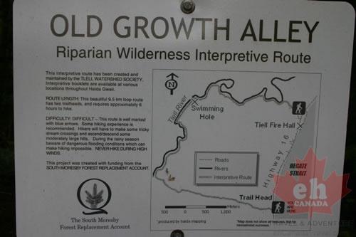 old-growth-alley-trailhead-orientation