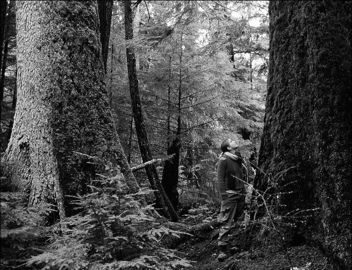 old-growth.-alley-big-trees